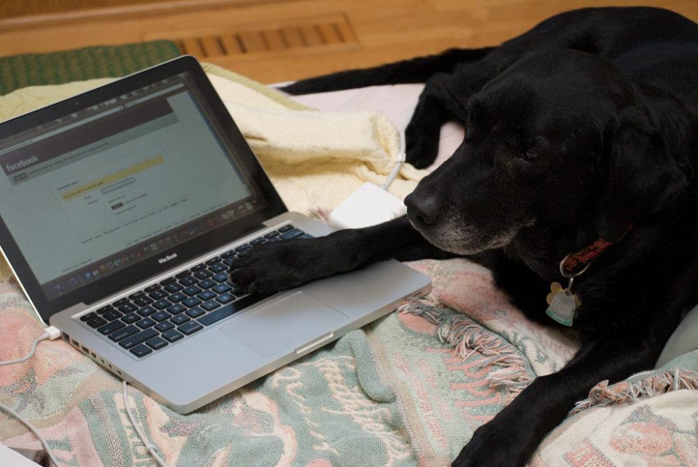 Je eigen hondenblog maken