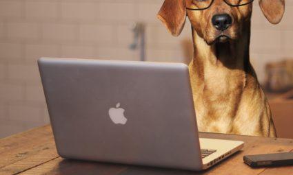 werk en hond combineren